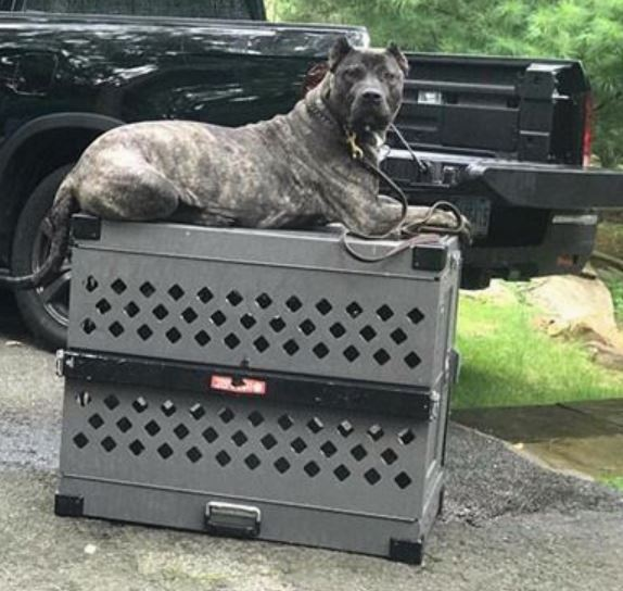 Impact Case Collapsible Dog Crate Review Is It Worth It