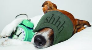 clock canine