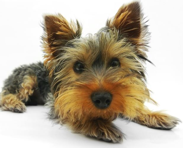 17 Best Low Maintenance Dogs Both Small And Large Breeds