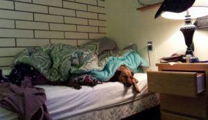pooch in bed