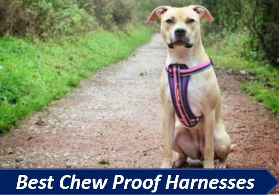 the best chew proof dog harnesses