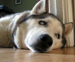 bored canine
