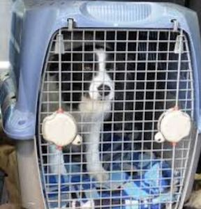 pet in cage
