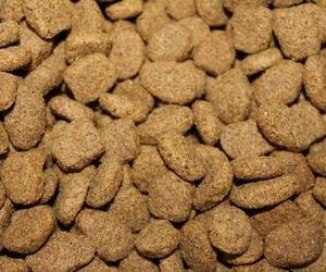 food for young canine